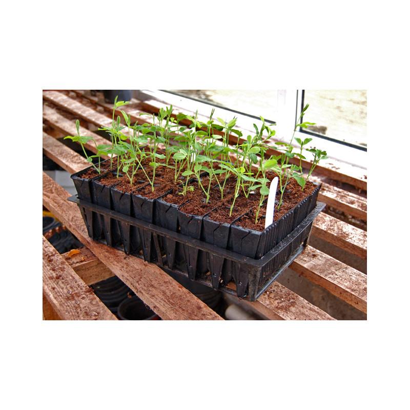 Godets semis pour racines profondes for Jardinetsaisons