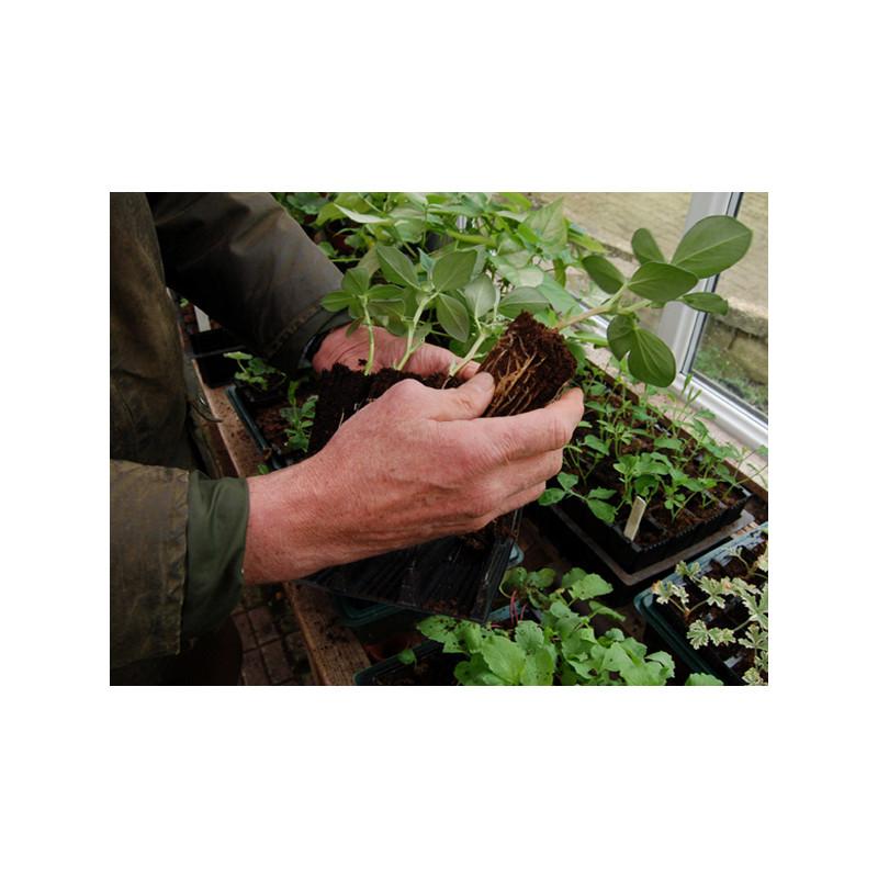 godets semis pour racines profondes jardin et saisons. Black Bedroom Furniture Sets. Home Design Ideas