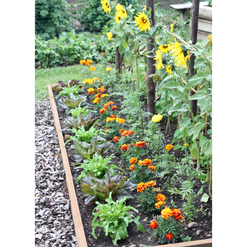 Votre bordure de jardin en bois 1 30 m chez jardin et saisons for Jardin potager bois