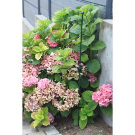 Choix vari de tuteur pour plante grimpante avec jardin et - Tuteur plante grimpante ...