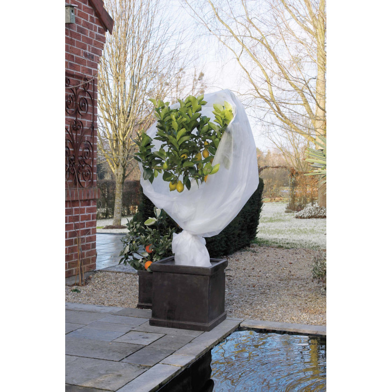 Voile d 39 hivernage pour plantes et fleurs jardin et saisons for Hivernage des plantes