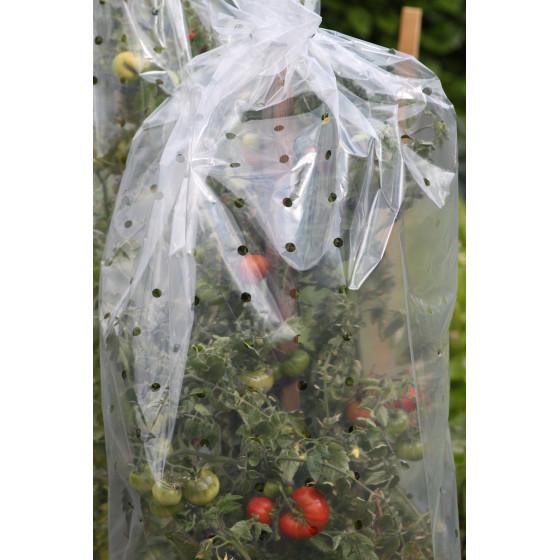 Housses de forçage tomates (10 m)