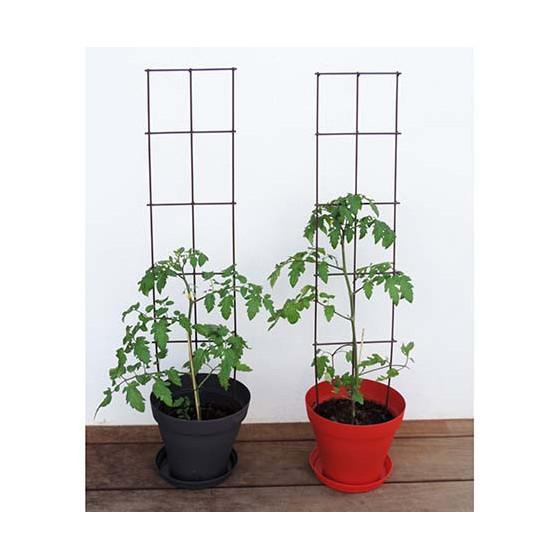 Tuteur support de plantes en fer vieilli planter for Jardiniere pour plante grimpante