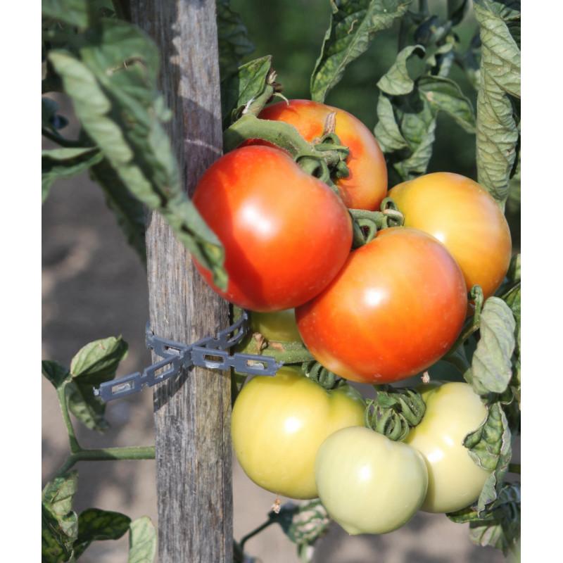 Jardin et saisons vous propose une attache pour tuteur for Jardinetsaisons