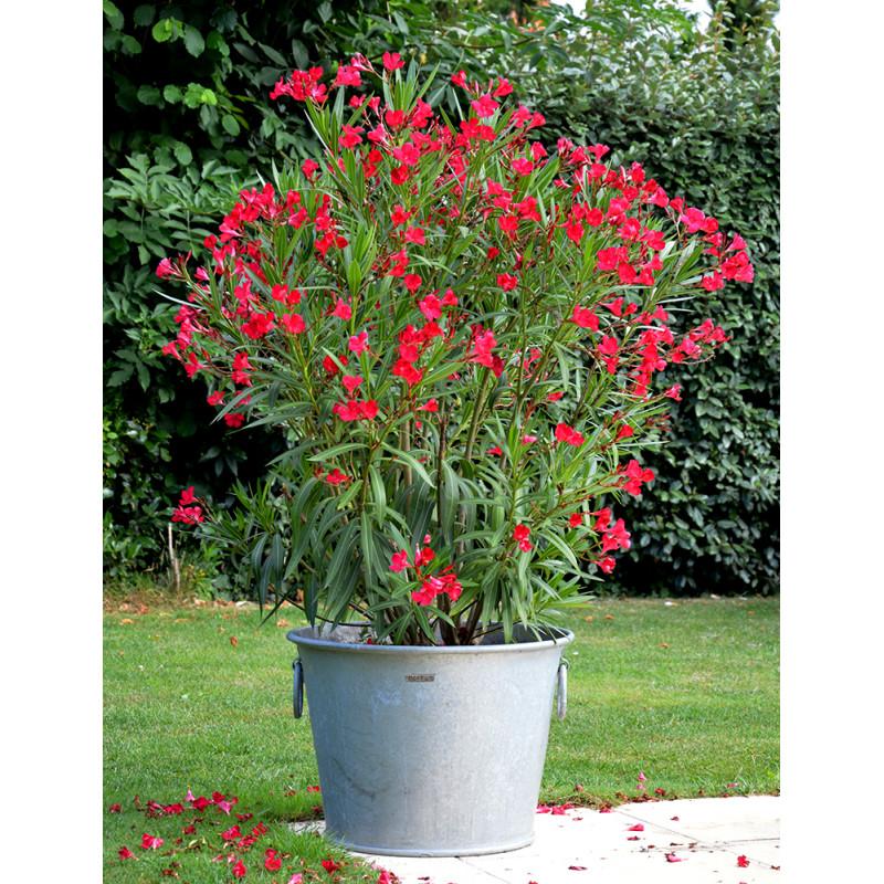 craquez pour le pot en zinc rond 110 litres de jardin et saisons. Black Bedroom Furniture Sets. Home Design Ideas