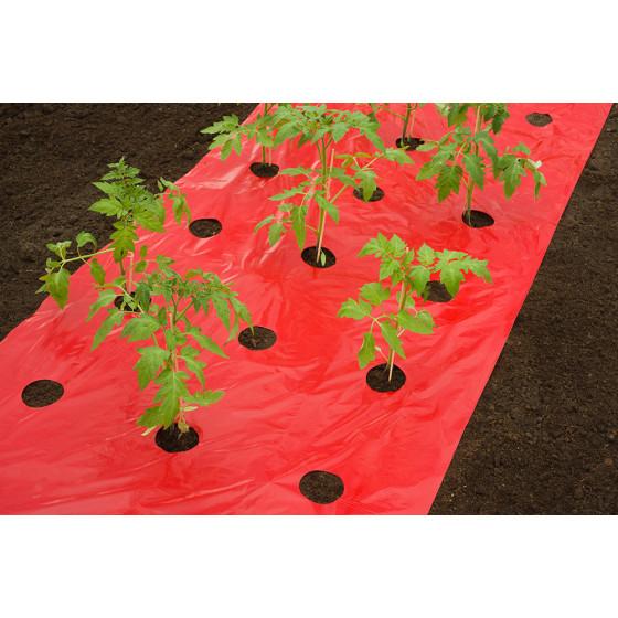film de paillage tomate rouge avec 42 trous d coup s 0 95 x 5 m. Black Bedroom Furniture Sets. Home Design Ideas