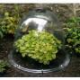 Cloche de jardin victorienne avec aération H 30 (les 3)