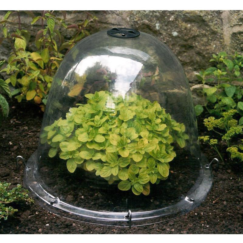 cloche de jardin victorienne plastique transparent
