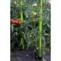Tuteur à tomate en plastique recyclé 1,80 m vert anis
