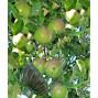 Cueille fruit télescopique