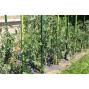 Tuteur à tomate en plastique recycle 1,80 m vert anis
