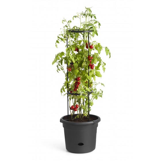 Pot à tomates 10 L en polypropylène avec réserve d'eau et tuteur