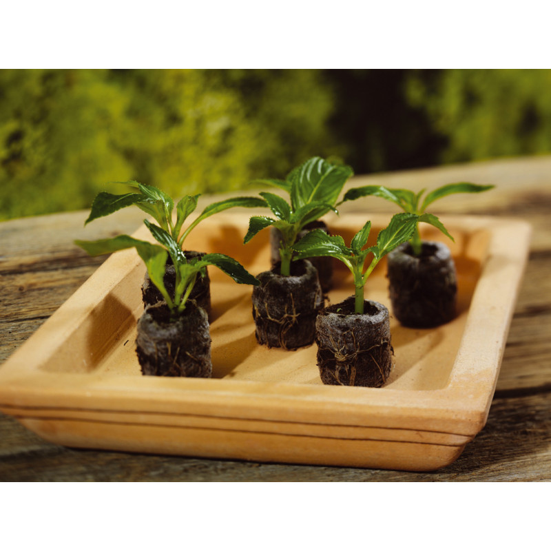Pastille de coco compress e biod gradable pour semis for Jardinetsaisons