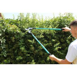 coupe branche téléscopique à crémaillère