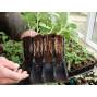 Godet pour semis pour racines profondes