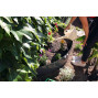Bordure de jardin en acier gris anthracite H 25 cm