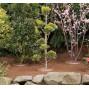 Couronne d'arrosage économique pour arbre (les 3)
