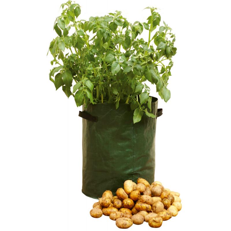 Planter des pommes de terre sur balcon sans potager jardin et saisons - Date plantation pomme de terre ...