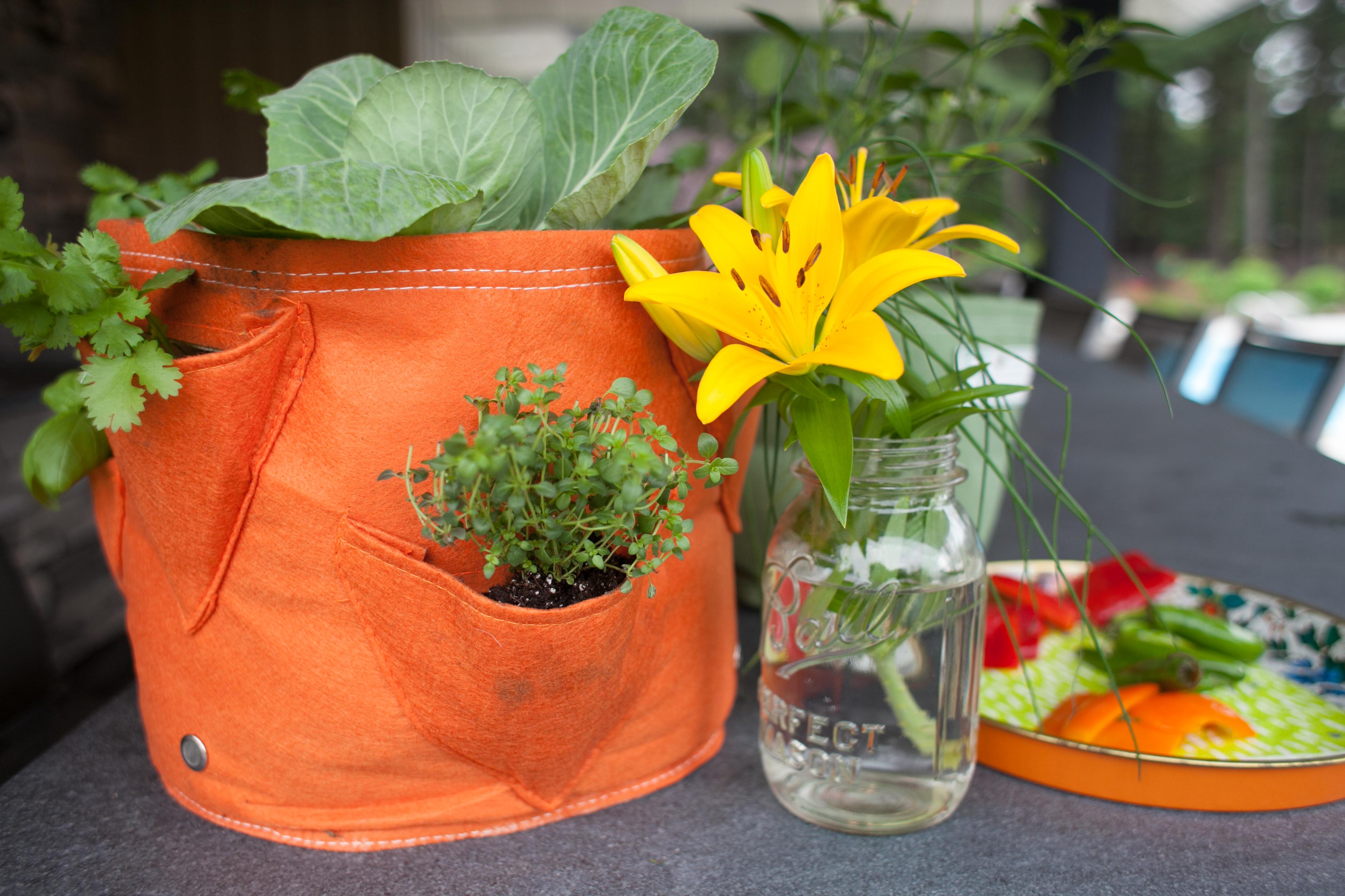 Tout savoir sur la culture en sac plantation pour faire for Jardinetsaisons