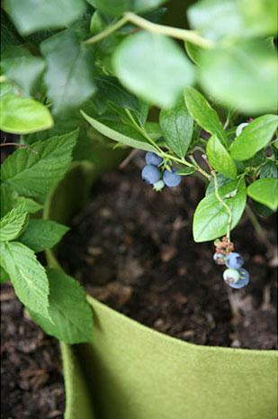 tout savoir sur la culture en sac plantation pour faire pousser l gumes tomates plantes. Black Bedroom Furniture Sets. Home Design Ideas